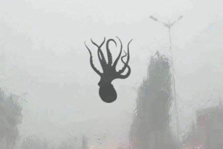 Qingdao w Chinach: z nieba spadały ośmiornice, krewetki i inne owoce morza.