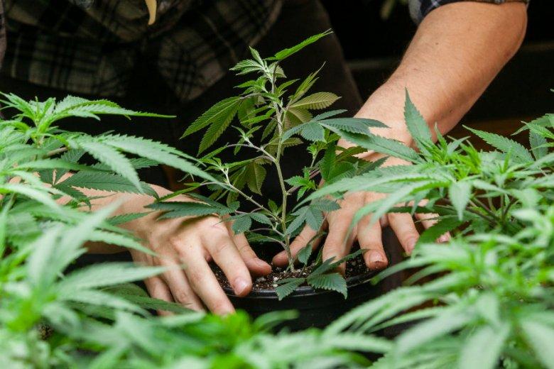 Ksiądz w Gorzowie Wielkopolskim miał stworzyć profesjonalną plantację marihuany.