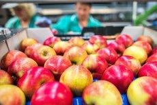 Amatorów jabłek czeka droższa jesień. Ceny pójdą w górę.