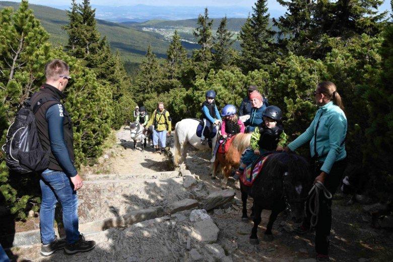 Turyści postanowili zdobyć szczyt Śnieżki, dzieci jechały na kucykach. A internauci piszą o szczycie głupoty.