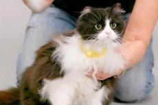 """Obroża Catterbox pozwala przełożyć koci """"język"""" na komunikaty zrozumiałe dla człowieka"""