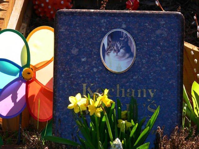 Na cmentarzu są również koty.