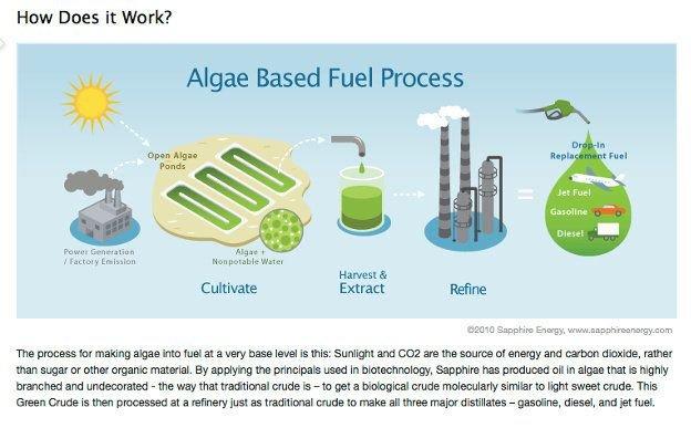 Od alg do benzyny. Takie technologie są już dostępne.
