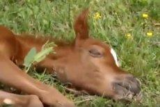 Dla spragnionych widoku zielonej trawy synoptycy mają dobre wieści – już niedługo!