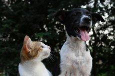 Przygarnij kota ze schroniska. Adoptuj kota z kociego azylu. Łatwiej powiedzieć, niż zrobić.