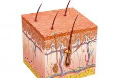 Struktura skóry i włosów