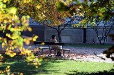 W tym roku listopad jest rekordowo ciepłym miesiącem.