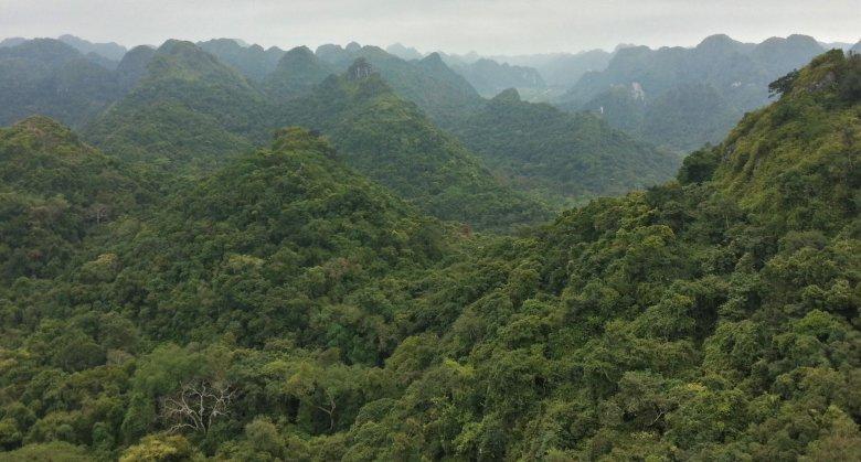 Skuterem przez dżunglę.