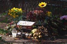 Odkryto masowy grób dzieci (fotografia jest ilustracjądo tekstu)