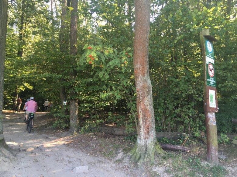 Konieczności oczekiwania na przyjazd Eko Patrolu nie ma, jednak czasem, zwłaszcza wśród drzew, na pierwszy rzut oka nie widać poszkodowanego zwierzęcia.