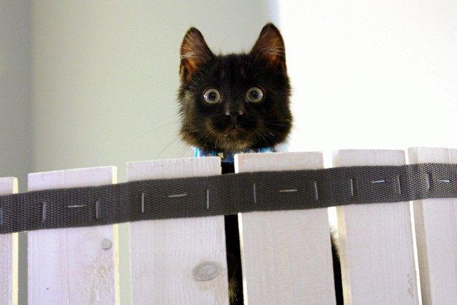 Stosunek do kotów nie powinien mieć barw partyjnych