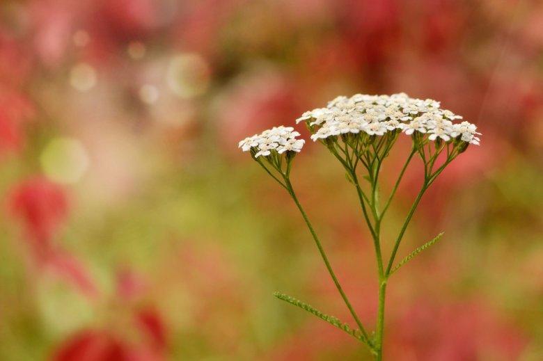 Dzikie rośliny jadalne to często kwiaty, które znamy z miejskich łąk i podwórek.