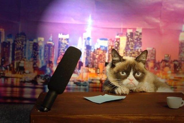 Grumpy Cat gwiazdą kina? Czemu nie!