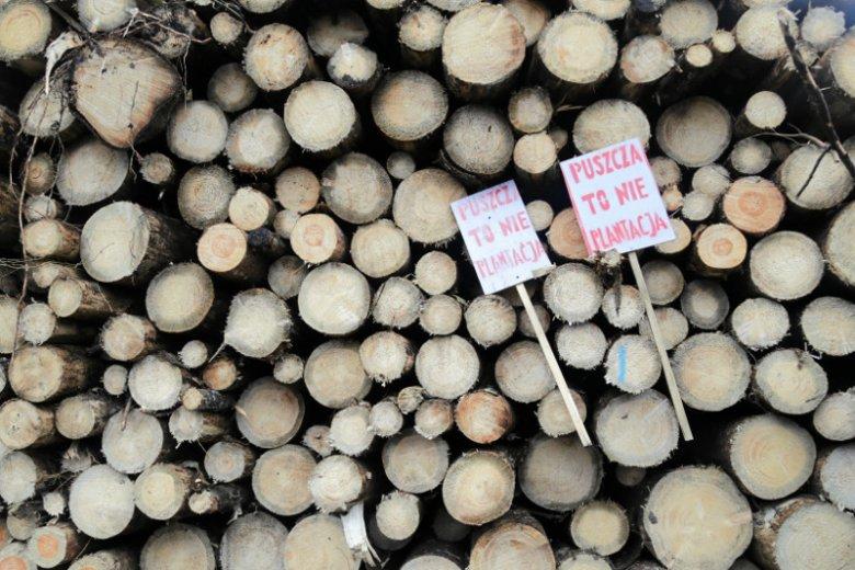 Rzecznik Generalny Europejskiego Trybunału Sprawiedliwości wydał opinię, według której wycinka drzew w Puszczy Białowieskiej była nielegalna.