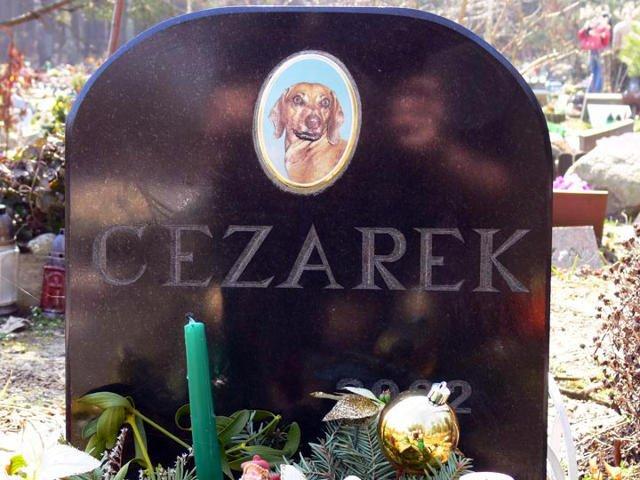 """Nagrobek z cmentarzu """"Psi Los""""."""