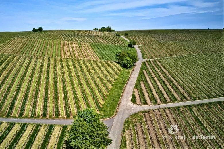 Winnice koło Volkach w dolinie Menu