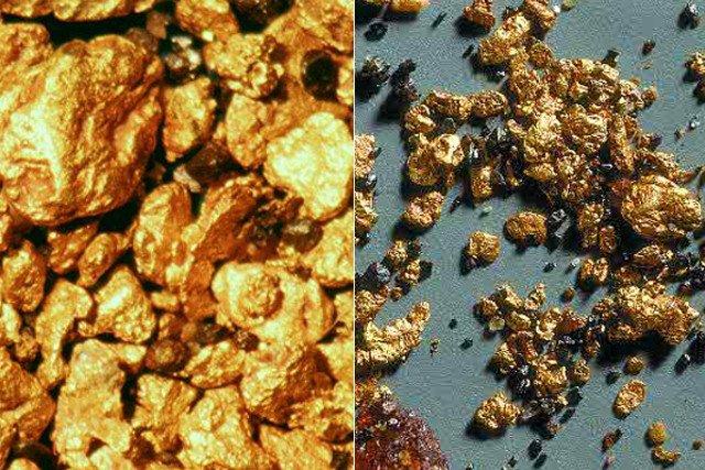 Duże powiększenie samorodków złota wypłukanych z potoku w okolicach miasteczka Wleń na Dolnym Śląsku.