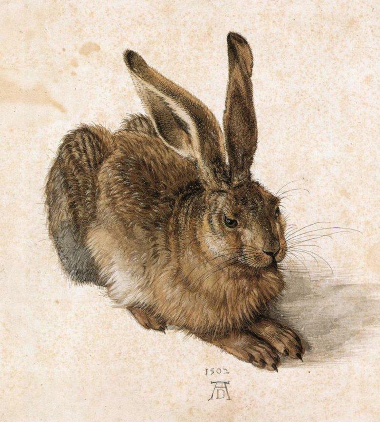 Zając na ilustracji Albrechta Dürera z 1502