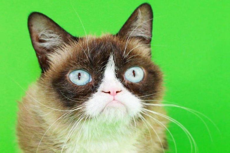 Kotka stała się popularnym memem w internecie.