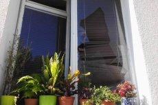 Wybite okna w mieszkaniu Rafalali