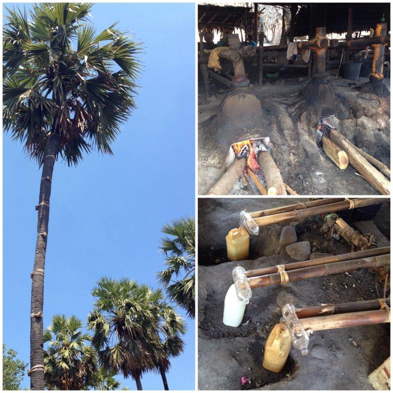 Fot.1. Palma z ktorej uzyskuje się sok palmowy. Dla ułatwienia wspinaczki na pniu umieszczono obejmy, po których można łatwiej wspiąć się na szczyt.  Fot. 2,3- Instalacja do produkcji araku.