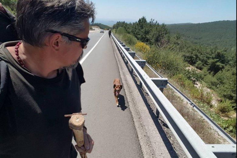 Pies bardzo szybko przywiązał się do pana Romana i postanowił przebyć z nim długą podróż.