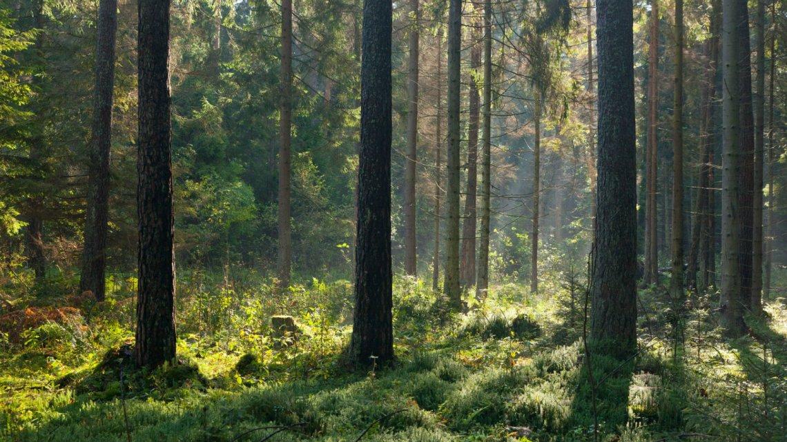Jesienny poranek w Puszczy Białowieskiej