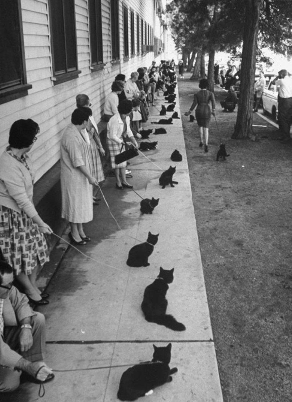 """1961, Kalifornia, piątek 13-go, na casting do głównej kociej roli w niskobudżetowym horrorze """"Tales of terror"""" stawia się 152 podekscytowanych właścicieli czarnych kotów z nieco tylko mniej euforycznymi pupilami."""
