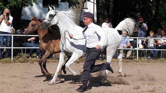 Pokaz koni w Janowie Podlaskim, 14 sierpnia 2017