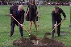 Trump i Macron zasadzili dąb w kwietniu 2018 roku.
