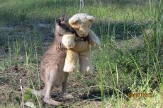 Jako pierwszy zdjęcie małego torbacza opublikował na Twitterze mieszkaniec Tasmanii, Tim Beshara.
