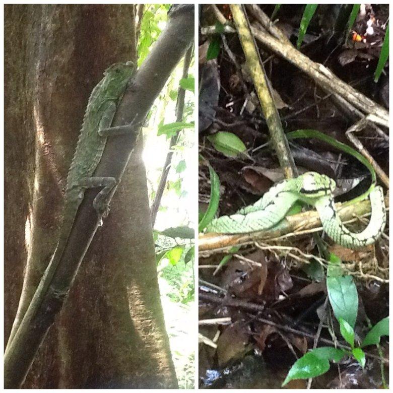 Singharaja Rainforest, Sri Lanka