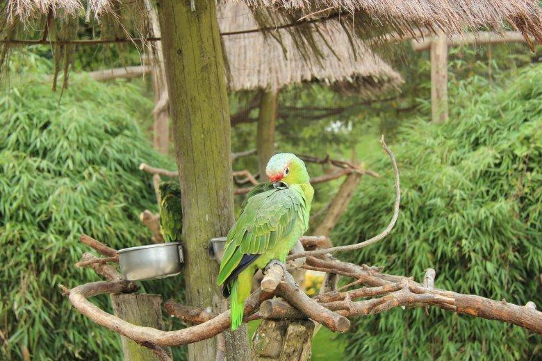 Detmold Vogelpark (Niemcy)