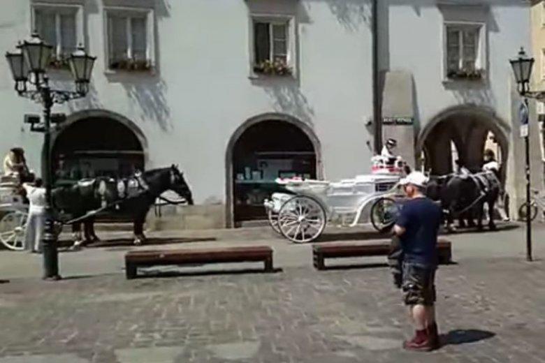 Aktywiści informują o fatalnych warunkach pracy koni na krakowskim rynku.