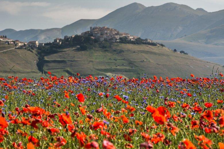 Miasteczko Castelluccio w Umbrii, górzystym regionie w środkowych Włoszech, słynie z upraw maków i soczewicy.