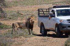 Polowanie w stylu safari ma coraz więcej zwolenników.