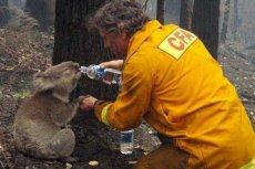 Mieszkańcy Australii starają się jak mogą, aby ugasić pożary.