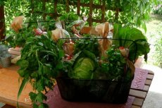 Koszyk warzywny