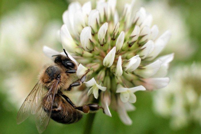Na jad owadów błonkoskrzydłych uczulonych jest kilkanaście procent Polaków. Ciężką alergię ma ok. 4 proc.