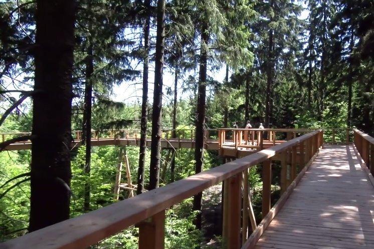 Czesi wiedza jak przyciągnąć turystów. Tym razem chcą przyciągnąć Polaków. Przy granicy powstała ogromna ścieżka wśród drzew. Podobną na południu Czech odwiedza rocznie ponad 20 tys. turystów.