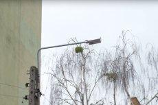 Jedną z ulic w podwarszawskim Piastowie rozświetliło 16 inteligentnych i energooszczędnych lamp