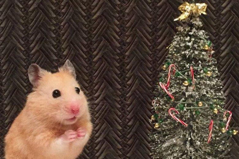 """Tryb """"świąteczna wyżerka"""" – odpalony!"""