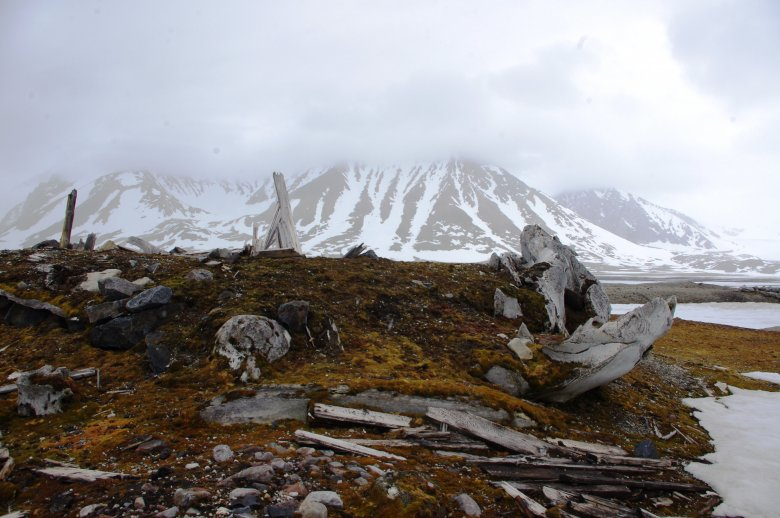 Gåshamna - pozostałości osady wielorybniczej. Na zdjęciu widoczne kości wielorybów
