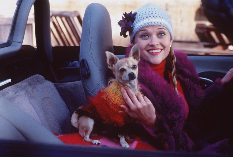 """""""Legalna blondynka"""" (2001) i bohaterka filmu Elle Woods, klasyczna miła dziewczyna"""