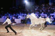 Stadnina w Janowie Podlaskim chce się pozbyć cennych koni. Na zdjęciu aukcja Pride of Poland 2019.