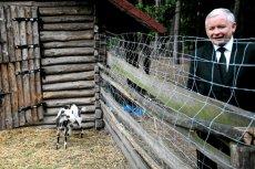 PiS jednego dnia wysłał wypowiedzenia ponad 300 kierownikom agencji rolniczej.