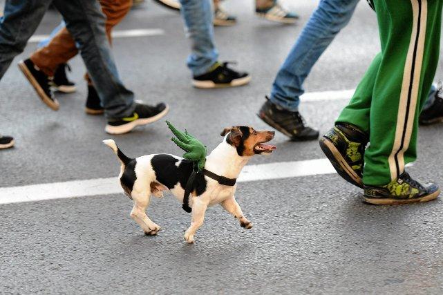 Manifestacja zwolenników legalizacji marihuany we Wrocławiu. A jak to było z marihuaną w przeszłości?