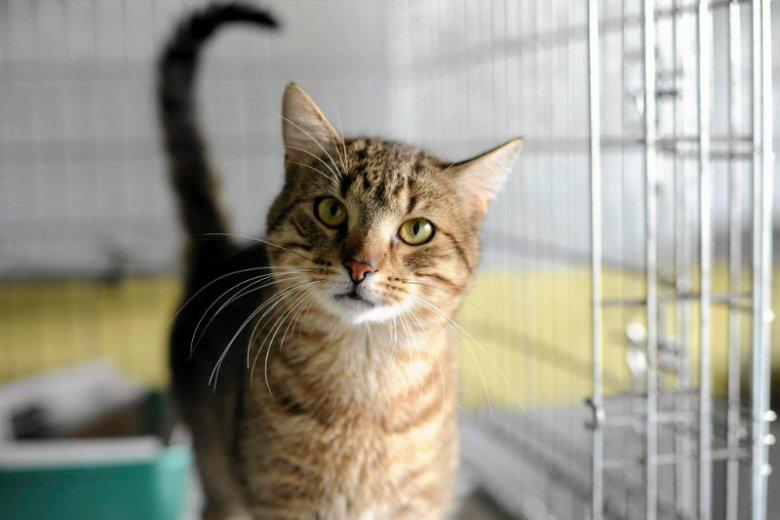 Kot do adopcji we wrocławskim schronisku