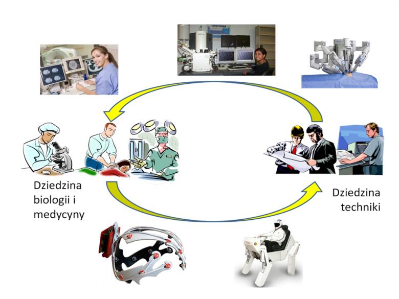 Wzajemne korzyści z przenikania idei biologicznych do techniki (na dole) i systemów technicznych do biologii i medycyny (na górze)