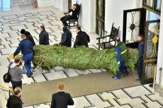 Nawet przez sejmowe straże przemknąć się mogą nieproszeni goście ukryci w choince. Świąteczne drzewko już stoi w gmachu Sejmu. Co jednak kryje się w jego igliwiu?